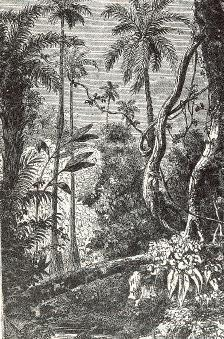 Alfred Russel Wallace - Floresta